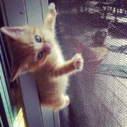 Котик на сетке